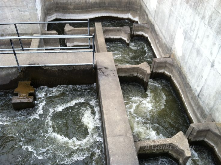 Downtown South Bend, Indiana  fish ladder