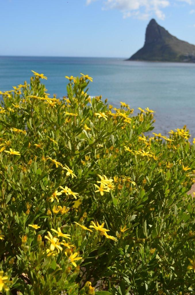 While the Atlantic team facilitates the hotel rebuild, nature is doing her work too - Spring has arrived, and the fynbos is giving a glorious show on the mountainside!
