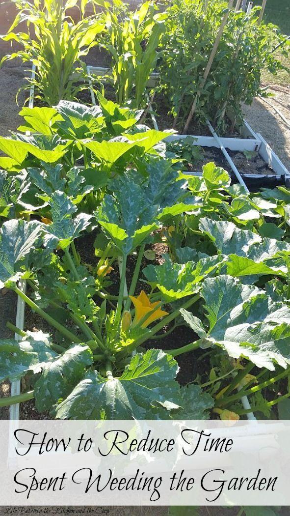 2724 best images about backyard vegetable and fruit gardening on pinterest raised beds - Weeding garden make work easier ...