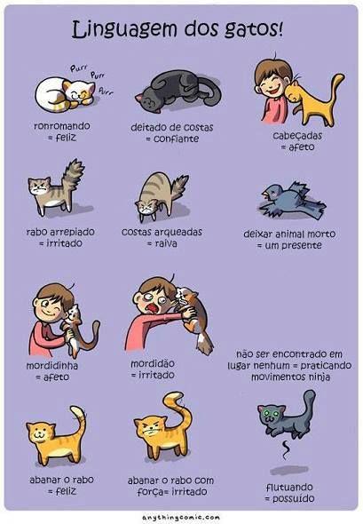 Manias de Leitura: Linguagem dos gatos.