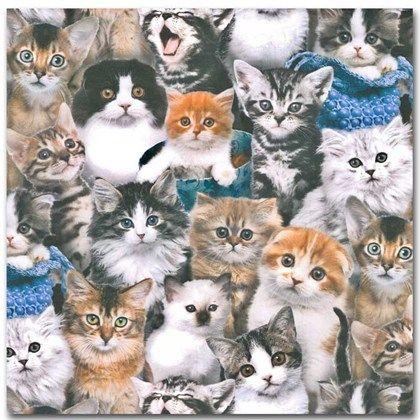 Bomullstyg med söta katter.