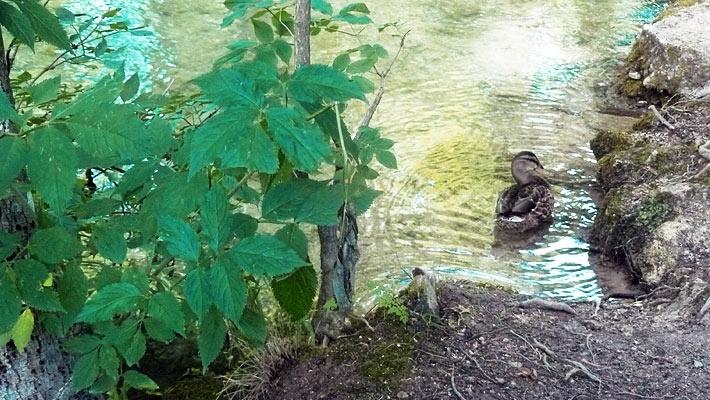 Parcul National Plitvice, o comoara naturala a Croatiei.  Vezi mai multe poze pe www.ghiduri-turistice.info