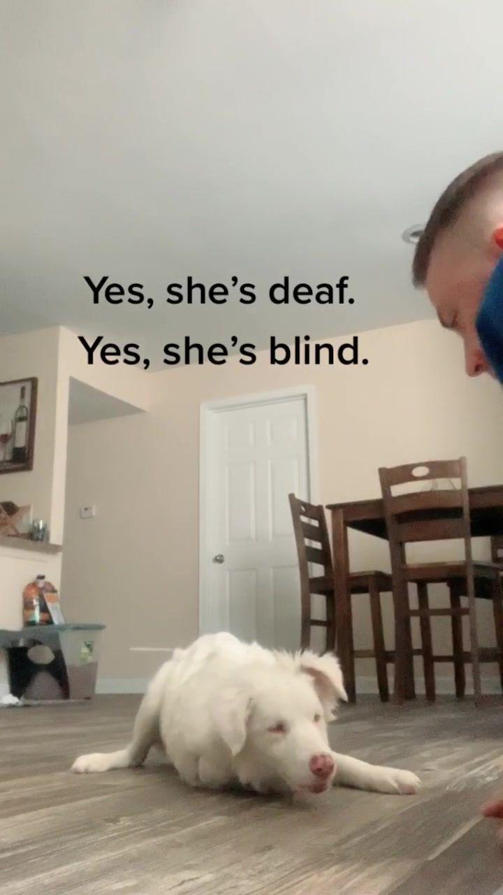 Aiden Mann Aiden M365 On Tiktok No Plums Were Injured In The Making Of This Video Deaf Blind Aussie Plum Fyp