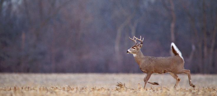 Deer hunting in Nebraska - Nebraska Game and ParksNebraska Game ...