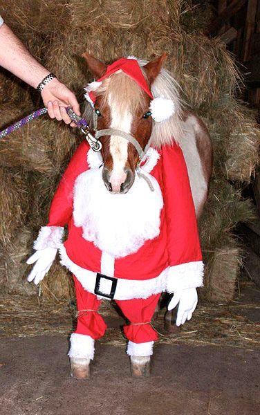 Horses ride costumes holiday animals holiday horses christmas horses