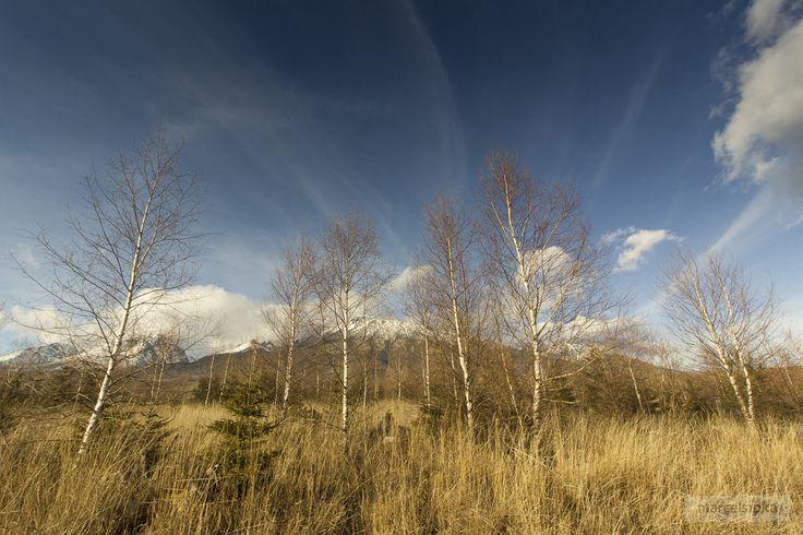 Birch trees under High Tatras #marcelsipka #hightatras #photo