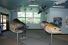 Nimbus Fish Hatchery - Sacramento, CA - Kid friendly activity reviews - Trekaroo