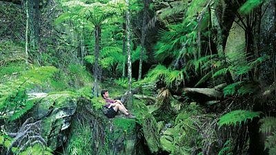 Neprostupné deštné pralesy jsou další z mnoha tváří Zélandu. Najdete tu taky mnoho unikátních rostlin a živočichů.