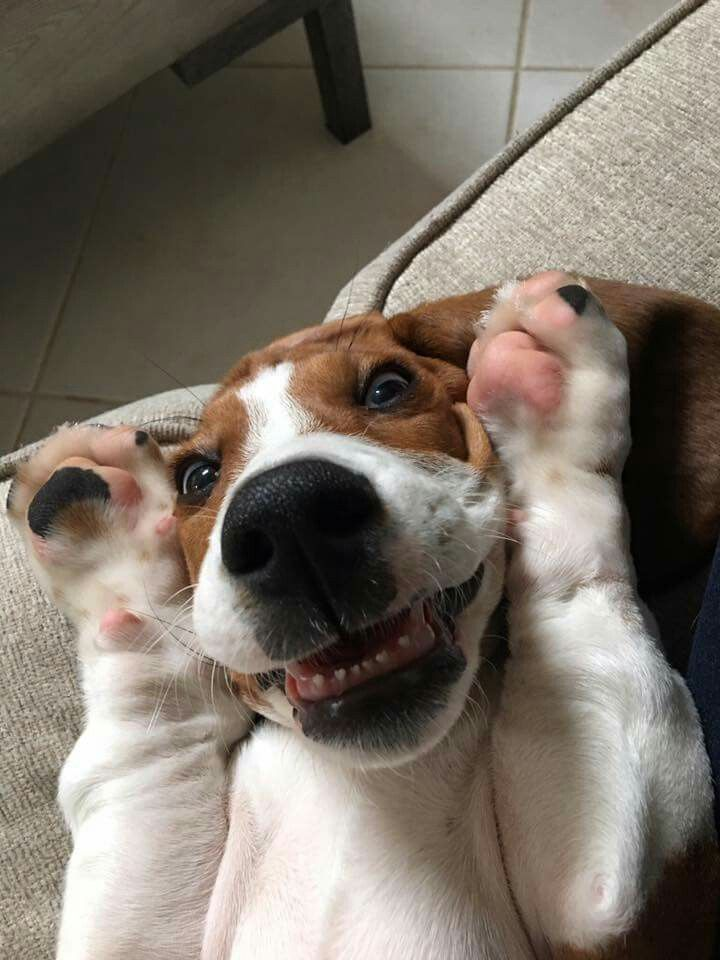 Happiest dog