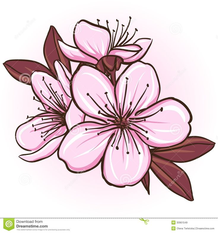 Foto sobre Flor de cerejeira. Ilustração floral decorativa de flores de sakura. Ilustração de florescer, cereja, arte - 30961549