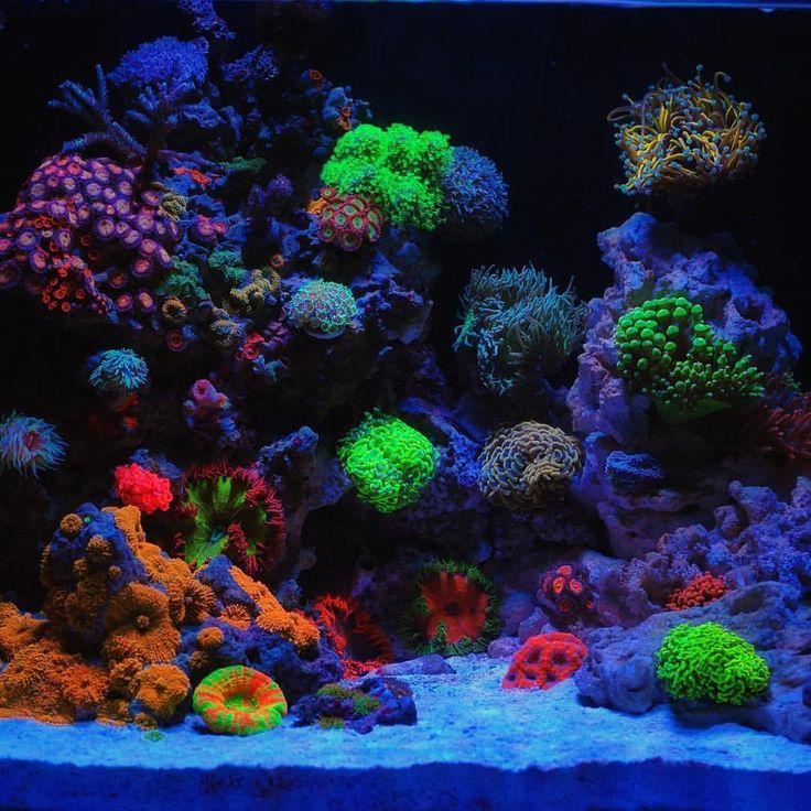 Saltwater Aquarium Aquascape: 17 Best Ideas About Reef Aquascaping On Pinterest