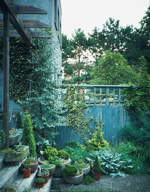 low pots: Gardens Fence, Container Gardens, Succulents Can, Gardens Gates, Pots Plants Gardens, Outdoor Area, Backyard Gardens, Shades Of Green