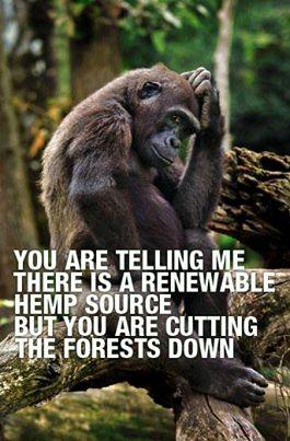 You are telling me there is a renewable hemp source but you are cutting the forests down ? / Vous me dites que le chanvre est une ressource renouvelable, mais vous abattez les forêts ?
