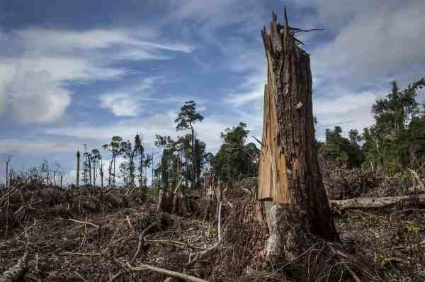 Humans have cut and burned forests for thousands of years. The delightfully moderate environments created by forests, the opposite of urban heat islands or the monotony of farms, are disappearing. …