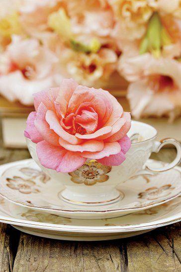Dzbanek, waza, filiżanka. Wszystko to wyjątkowo dobre miejsca dla róż!