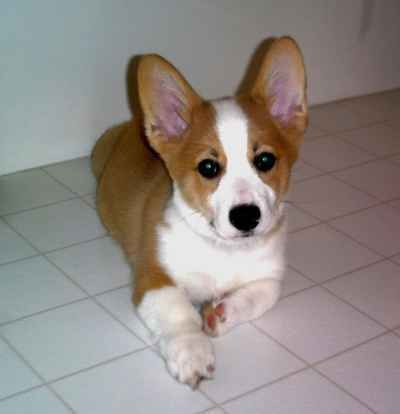 Dogs Breeds - Check Out These Excellent Source Of Information About Dogs ** To view further for this article, visit the image link. #DogsBreeds