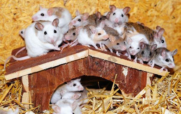 تفسير رؤية قتل الفئران في المنام رؤية قتل الفأر الصغير في الحلم تفسير حلم قتل الفئران للفتاة العزباء رؤيا الفأر من الأحلام ال Hamster Live Hamster Pet Store