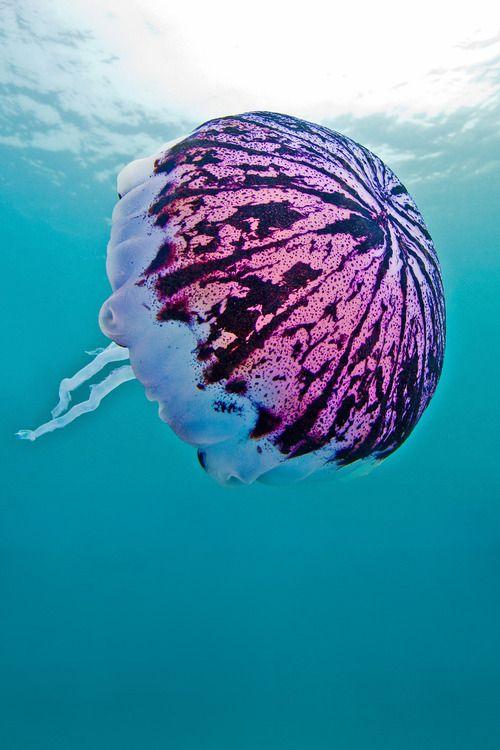 Jellyfish parece un paraguas