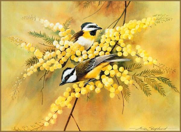Premise Indicator Words: Crested Shrike-Tit By Eric Shepherd