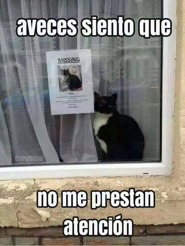Pobre gatooo