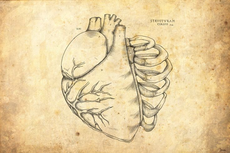 La estructura del corazon by DMC-Drawings.deviantart.com on @deviantART