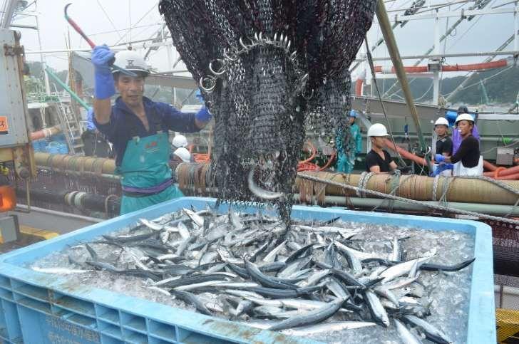 初水揚げされたサンマ。青々とした旬の魚体が浜に元気を運んできた=岩手県の宮古市魚市場で2016年9月3日鬼山親芳撮影