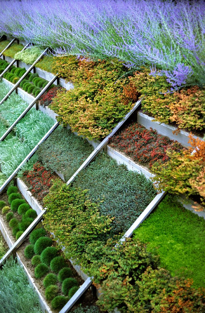 Great way to plant on a slope gardening ideas designs for Great bushes for landscaping