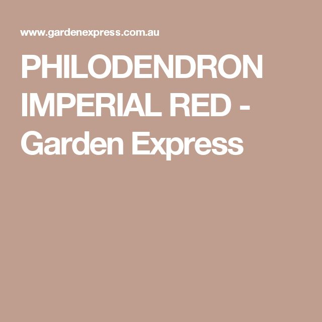 PHILODENDRON IMPERIAL RED - Garden Express