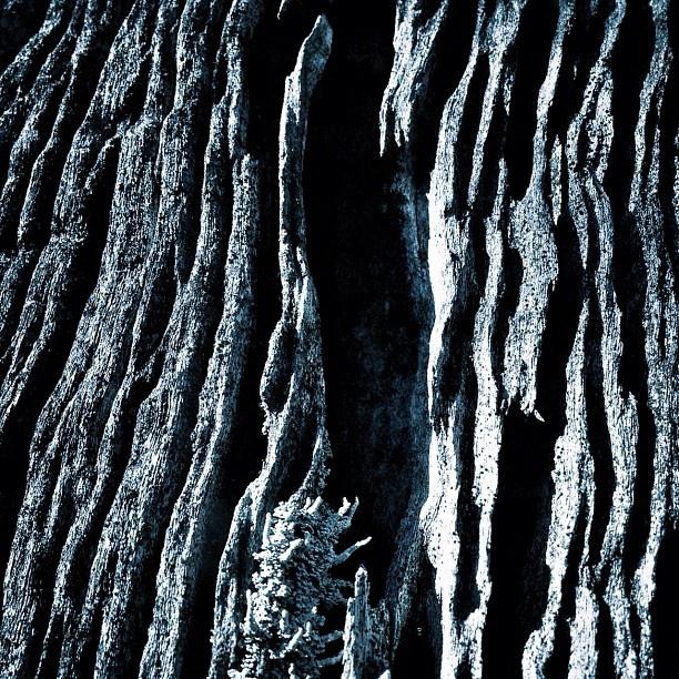 Alien mountain... or just an old tree? - @rafsarmento- #webstagram