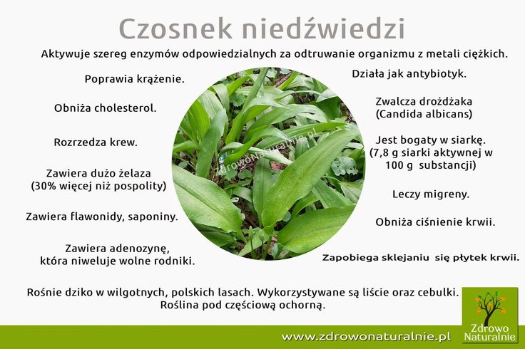 Czosnek niedźwiedzi | ZdrowoNaturalnie.pl