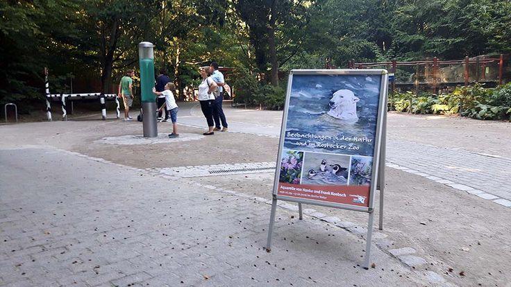 Vorbereitung für unsere Ausstellung im Rostocker Zoo | Plakat fur unsere Ausstellung -Beobachtungen in der Natur und im Rostocker Zoo (c) Frank Koebsch