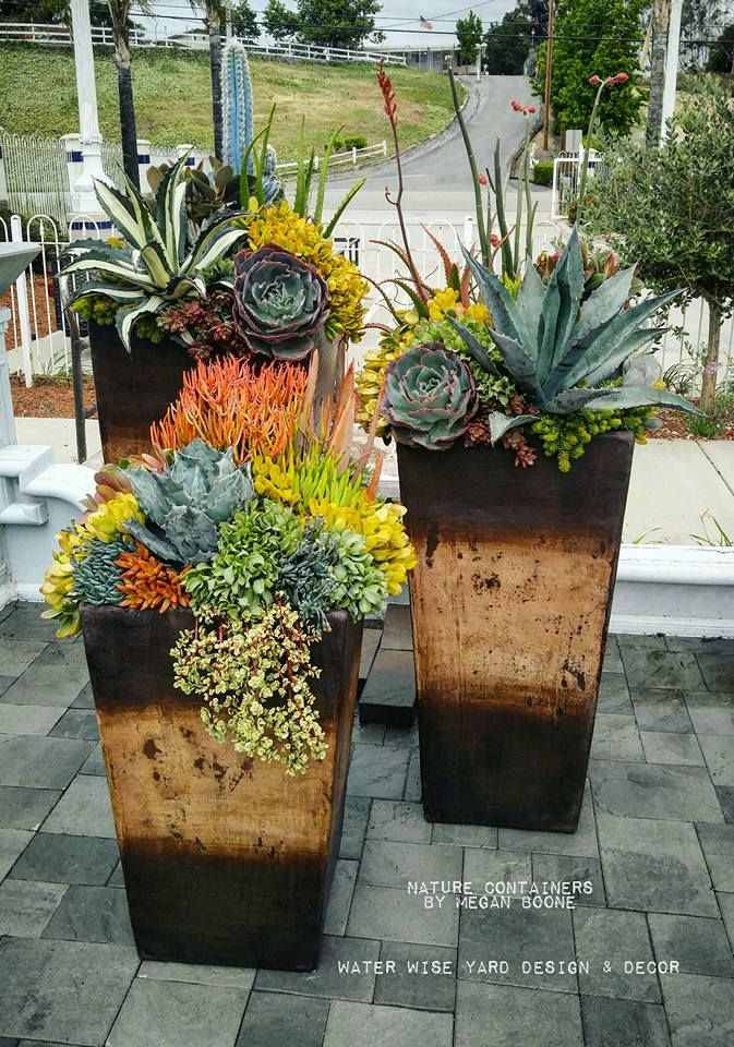 1000 ideas about succulent containers on pinterest for Garden arrangement of plants