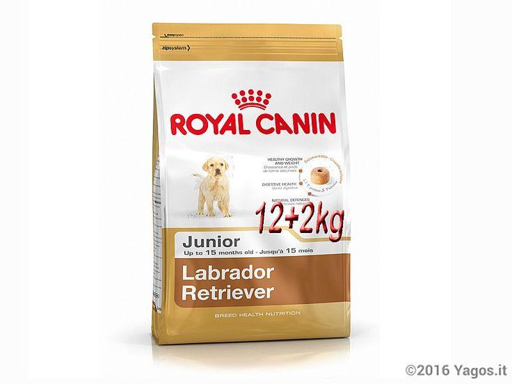 Alimento per cani Labrador Junior 12+2 kg in omaggio ROYAL CANIN