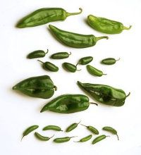 How to Cook Chili Peppers - Anaheim, Jalapeno, Poblano, and Serrano chilies are used in Mexican cooking.