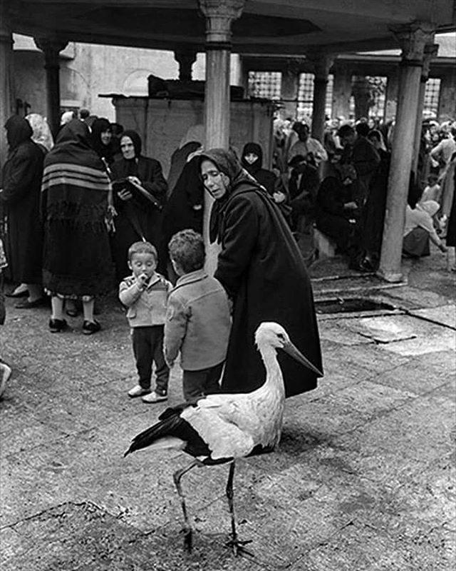 Eyüp Sultan Camii avlusunda bir leylek.1958. Fotoğraf:Ara Güler #eyüp #sultan #camii #leylek #fotoğraf #aragüler #tarihtarihdergisi