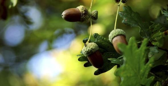Обед Робинзона: съедобные растения