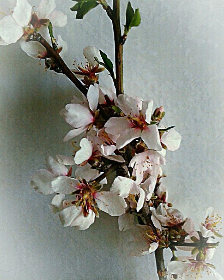 Spring♡