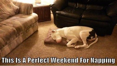 Funny Memes - [This Is A Perfect Weekend For]