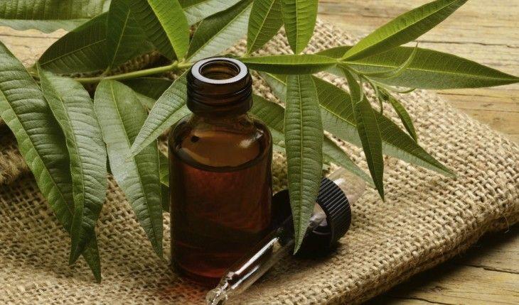 Эфирное масло чайного дерева: полезные свойства и применение - http://life-reactor.com/efirnoe-maslo-chajnogo-dereva/