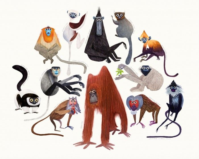"Brendan Wenzel ""Primates"" - just purchased! - makes me smile every time I look at it :)"