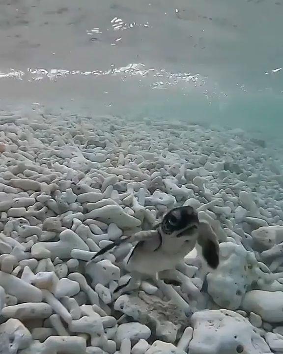 Cute little turtle baby
