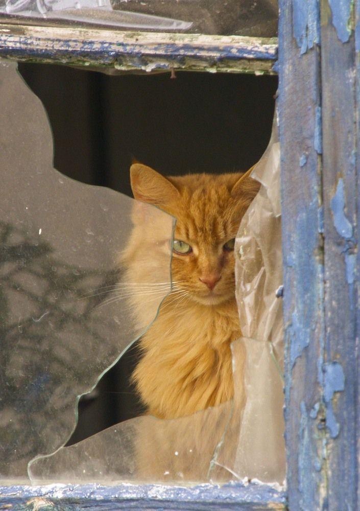 cat in broken window