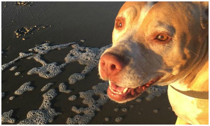 Ivy Inspired Her Family to Stretch, Strengthen, and Stand Up for Pits | Positively Woof