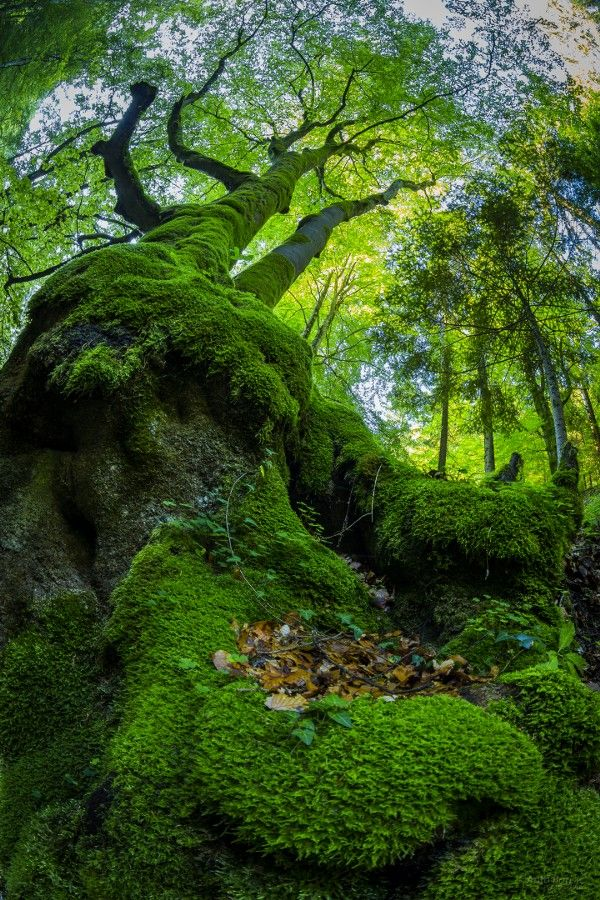 superbnature:  The moss by barisicphoto