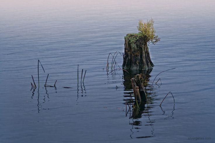 Solitude - Simply Pure Fiction