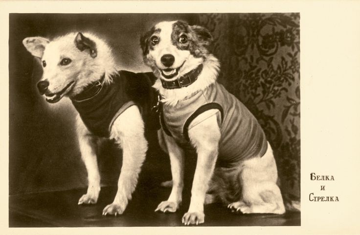Soviet space dogs.  This photograph of Belka and Strelka was taken at the dogs' first press conference in 1960 and printed onto a postcard.