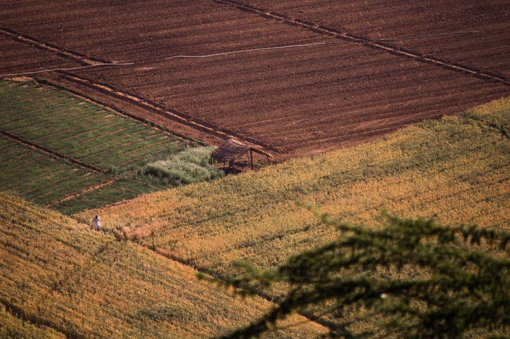 Farming land background