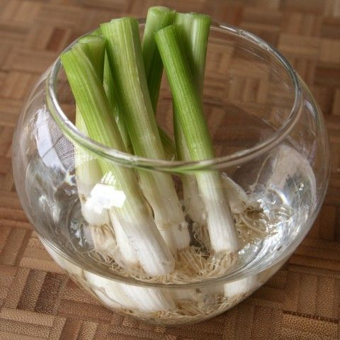 Grow green onions from cuttings! I wonder if I'll ever have to buy scallions again?