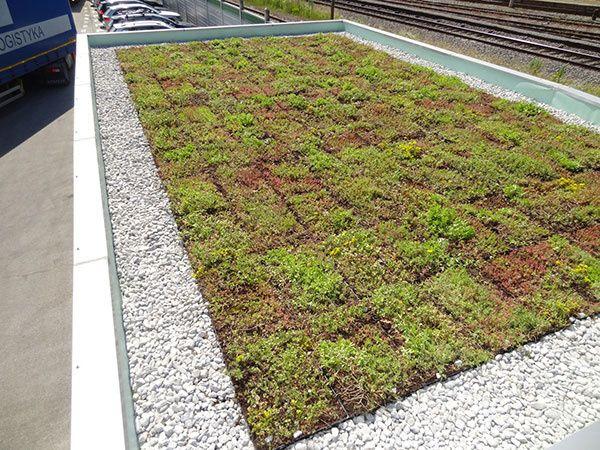 Zelené strechy sa dnes