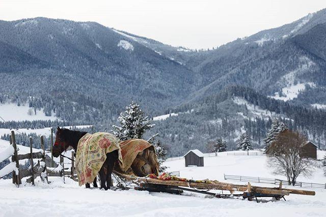 #pasultihuta #sleddogs #landscape #winter2018 #horses #beauty #nature #traditional #exploreeverything